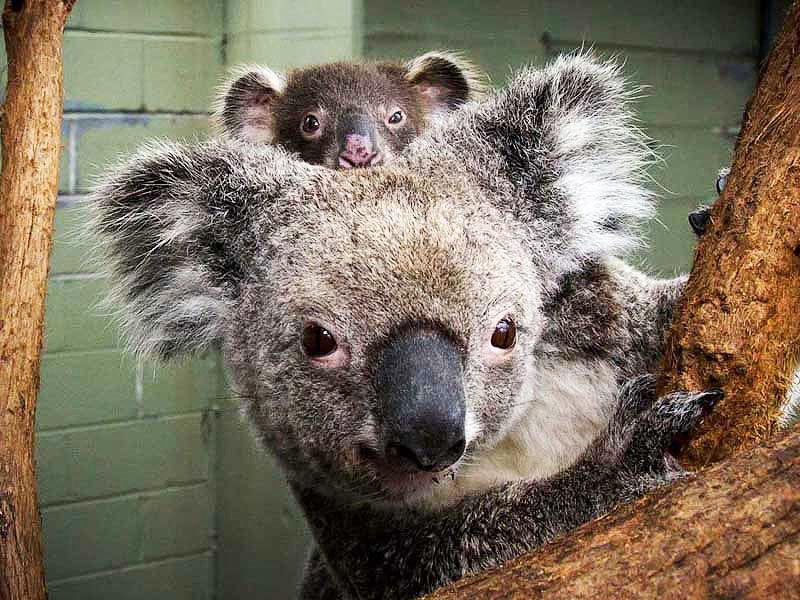 悉尼野生动物园 - 悉尼